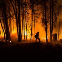 ЕС угрожает Бразилии санкциями за неучастие в тушении лесных пожаров
