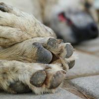В России запретят умерщвление бездомных животных