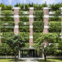Начинать озеленять дворы лучше с балконов. А карта расположения деревьев может спасти их от варварской обрезки