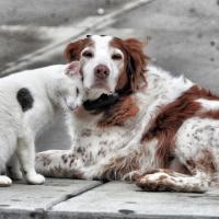 Зоозащитные организации обратились в Администрацию Президента с просьбой привлечь представителей общественности к разработке правил содержания домашних животных