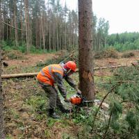 Украинские природоохранники добились запрета на санитарные рубки в заповедниках