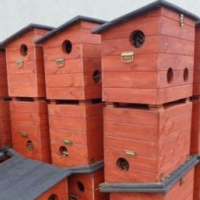 У бездомных котов Гданьска появились специальные домики