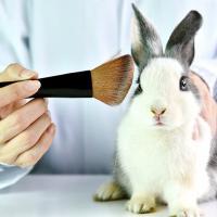 Какая косметика не тестируется на животных. И где её можно найти