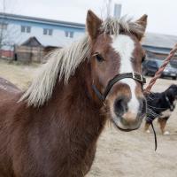 Кто-кто? Конь в пальто! Детективная история об украденном пони