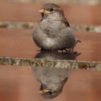 Лайфхак: Как сделать ванну для птиц и насекомых