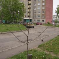 Онлайн-посадка деревьев уперлась в оффлайн-проблемы