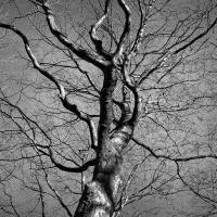 Инструкция по определению аварийности и жизненного состояния деревьев
