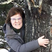 Обнимайте деревья, пока нельзя обнимать людей. Лесная служба Исландии рекомендует