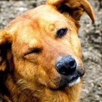 Ужесточить законодательство за жестокое обращение с животными