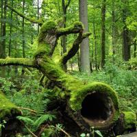 Какая рентабельность у природы? Эксперты оценили экосистемные услуги для устойчивого развития