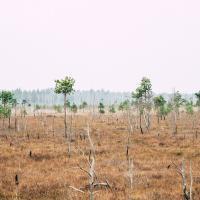 Ольманские болота выиграли от эпидемиологических ограничений