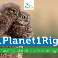 День Земли. Право на здоровую окружающую среду предлагают включить в Декларацию прав человека