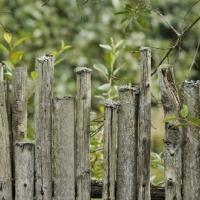 Прыборка на падворку: як не вырасціць памідоры са свінцом