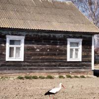 «Пчолы здурэлі і паляцелі куды жалы завуць». В инстаграм есть блог деревни Столинского района