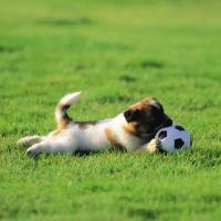 Сотни забитых голов. К чемпионату мира по футболу истребят беспризорных кошек и собак