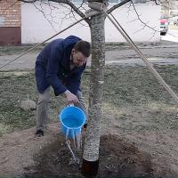Каждое пятое посаженое дерево должно быть взрослым. В Беларуси приняли новое постановление по озеленению жилых территорий