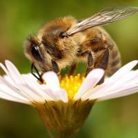 Ирландский пчеловод построил улей из конструктора LEGO (видео)