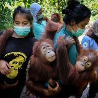 Природные драмы и последствия человеческого вмешательства в экосистемы. Лучшие фото природы на World Press Photo 2020
