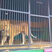 В отношении тульского передвижного зоопарка запущен административный процесс