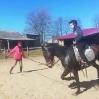 «Этого коня собирались отправить на мясо». Петиция против жестокого обращения с лошадьми стремительно набирает подписи. Может ли она что-то изменить?
