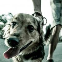 Гродненский фотограф показал мир глазами бездомной собаки
