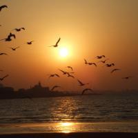 Почему на Земле вымирают птицы и сколько их мы уже потеряли