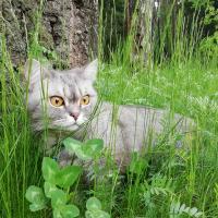 Домашняя кошка на самовыгуле. Что говорят зоозащитники, зоопсихологи и как к этому вопросу относятся сами кошки