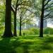 Юрист Григорий Фёдоров о новом законопроекте: «Появится «неприкосновенный» список парков и скверов, но к обрезке деревьев допустят непрофессионалов» (обновлено)