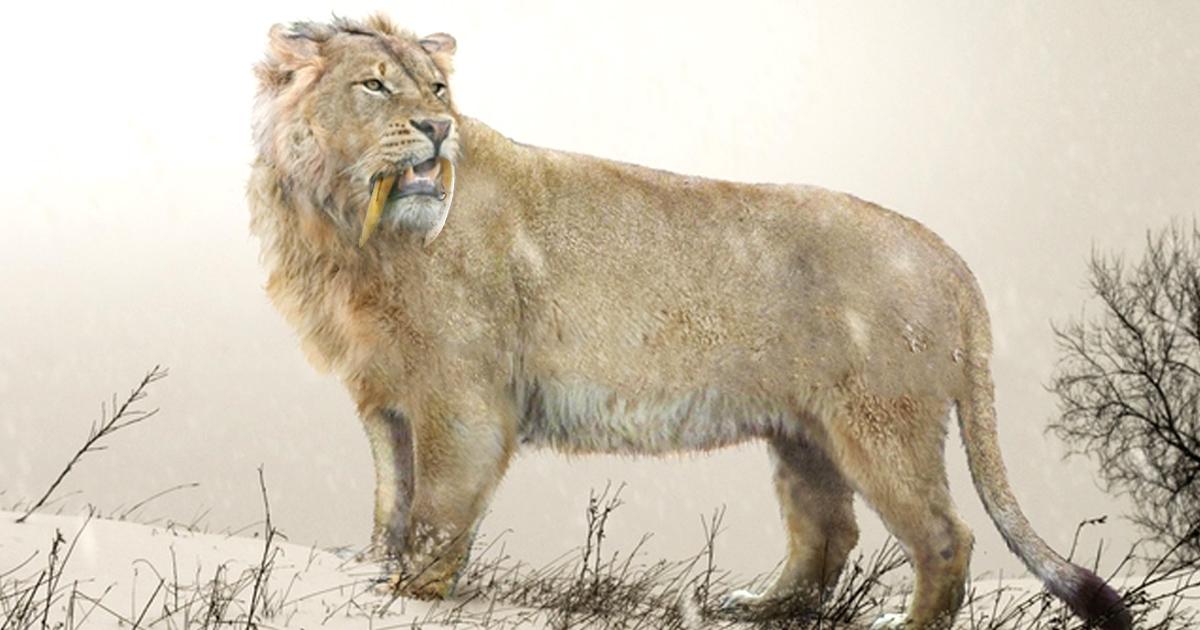 Картинки по запросу Лев пещерный, пещерный лев фото