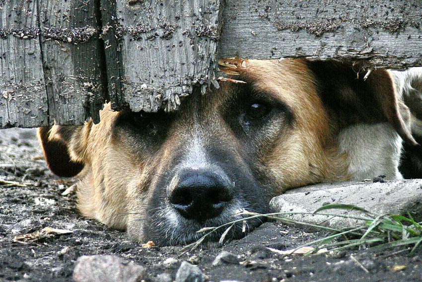 За жестокое обращение с животными могут ужесточить ответственность
