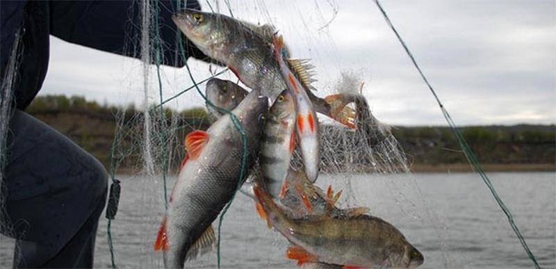 рыбные сети или рыболовные