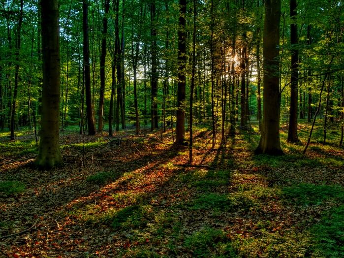 природа фото леса