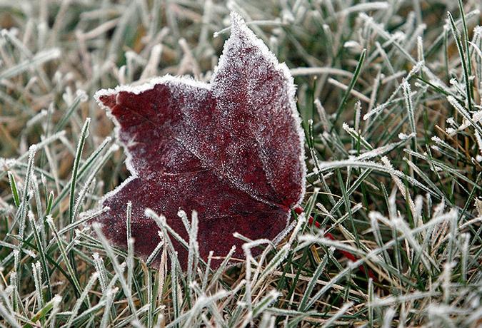 С Михайлова дня начинаются заморозки