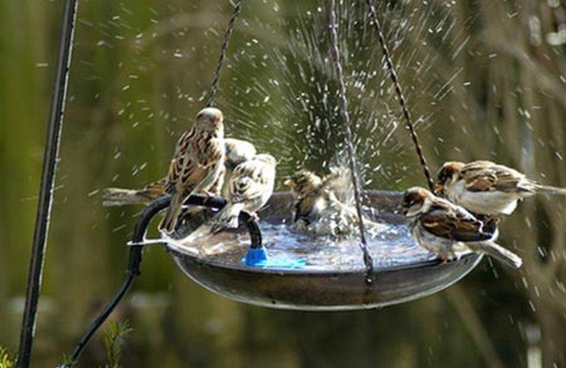 Поилка для птиц своими руками фото оригинальные идеи