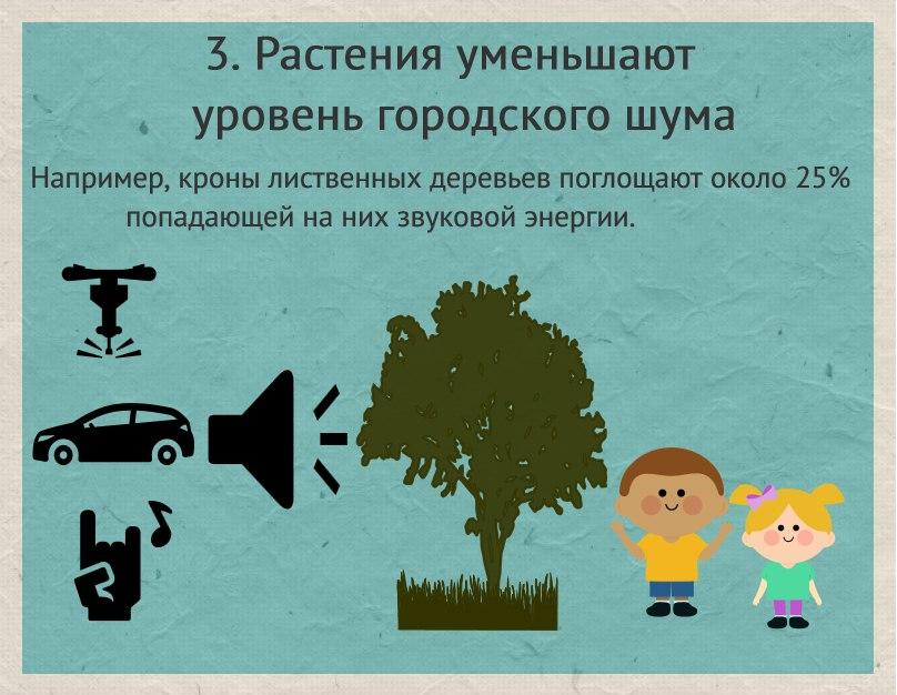 Зачем нужно сажать леса 53