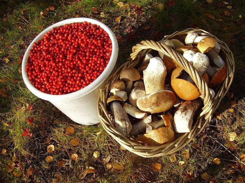 фото ягоды грибы