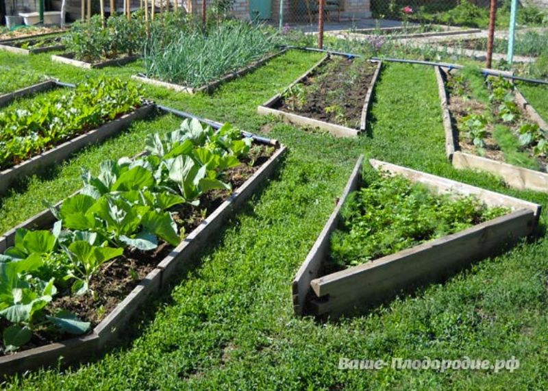 Органическое земледелие как сделать грядку