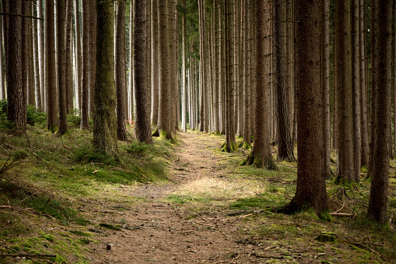 forest nature at your service essay The forest and the trees: sociology as life essay sociology as life essay writing service  with regard to the nature of social life and how it could.