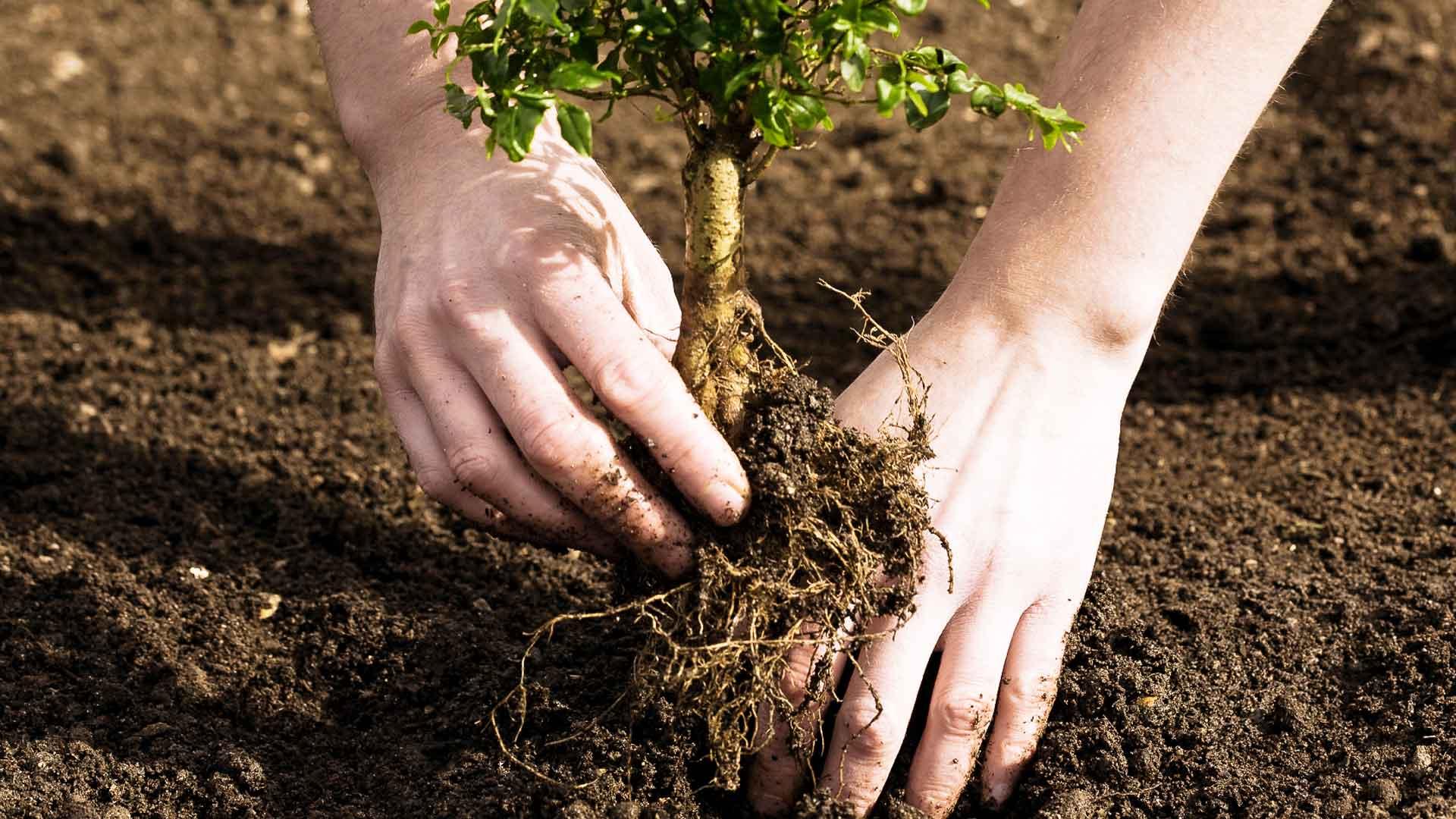 Какие деревья сажать во дворе осенью 68