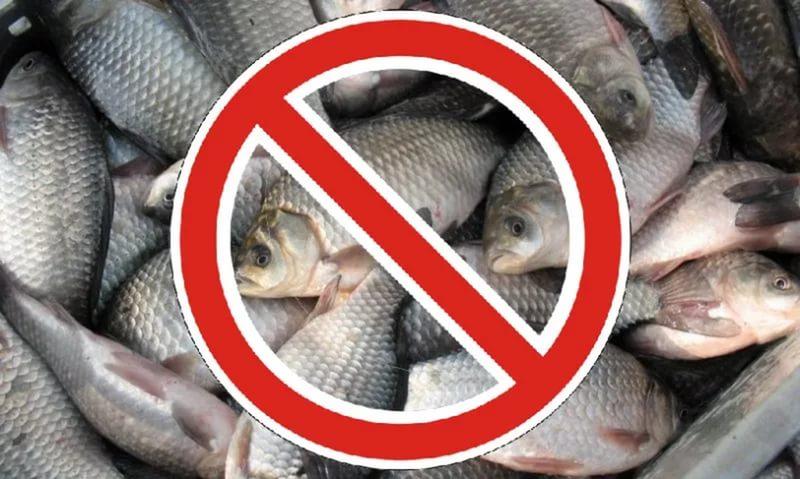 запрет на ловлю рыбы в одесской области 2017
