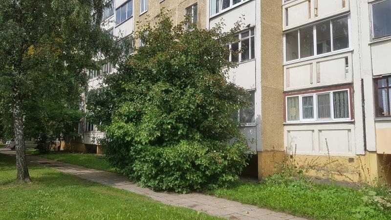 Кусты тоже могут перекрывать освещение – и еще как! Кто бы мог подумать, что боярышник у дома 32 по ул. Пономаренко дорастет до третьего этажа