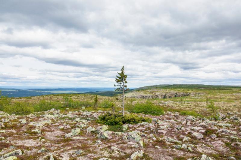 Фото - Lars Johansson/Getty Images/iStockphoto