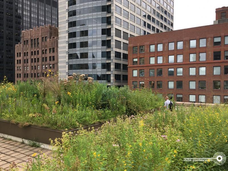 Крыша в Чикаго