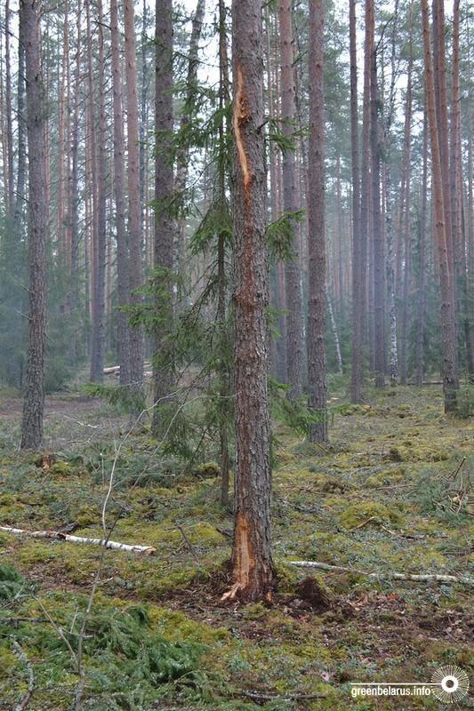 Повреждение деревьев при уходе
