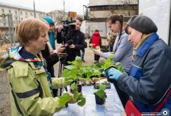 Сакуры, яблони и ежевика: в центре Минска основали городской сад