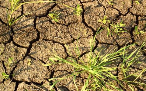 Деградация земель: если государство не справится – будем есть сверчков
