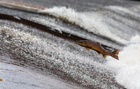 ООН: Одна пойманная рыба из трёх никогда не попадает на тарелку