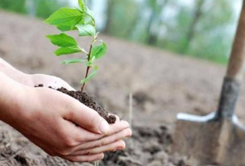 Компенсационные посадки: В Минске посадили тысячи деревьев, выжили немногие