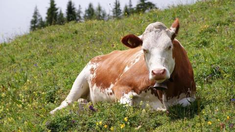 Отказ от мяса – это самое эффективное, что вы можете сделать для экологии