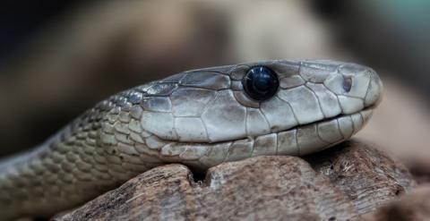Не трогайте змей! Они сами уйдут